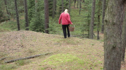 Woman walking and picking wild mushrooms in the forest.