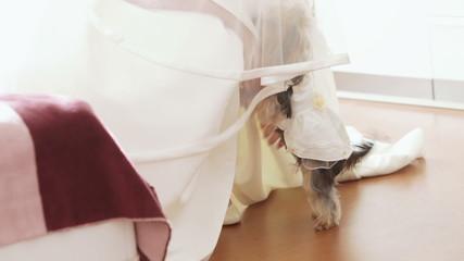 Dog of bride