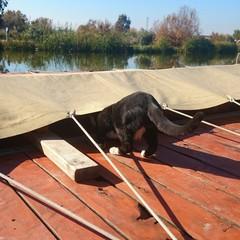 Gato metiéndose bajo la lona de una barca
