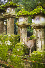 Deer in Nara Shinto temple park