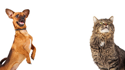 Fun Dog and Cat With Copyspace