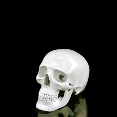 Skull on black background.