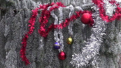 hoarfrost and Christmas New Year toys on fir tree branch