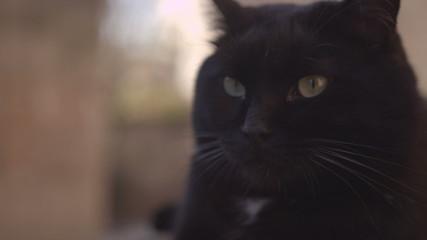 Big black cat sitting