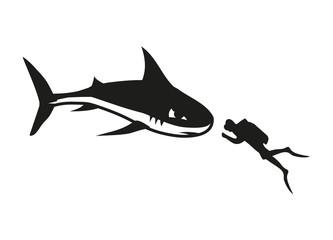 Hai und Taucher