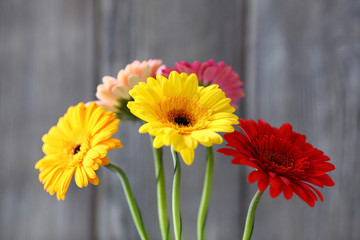 bouquet of gerberas on a gray background