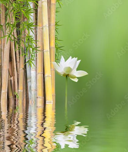 Poster Water planten décor relaxant asiatique, bambous et lotus blanc