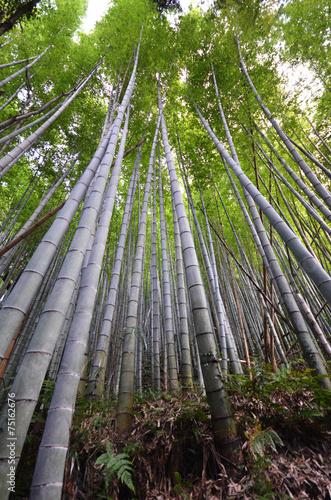 In de dag Bamboo Bamboo grove, bamboo forest at Arashiyama