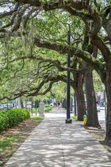 Sidewalk Under Old Oak Limbs
