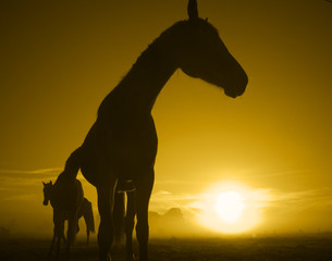 horse in the sunrise_toned