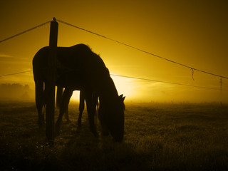 grazing in the sunrise_toned