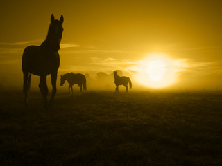 one of three horses in the sunrise_toned