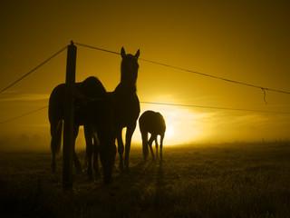 sunrise with horses_toned