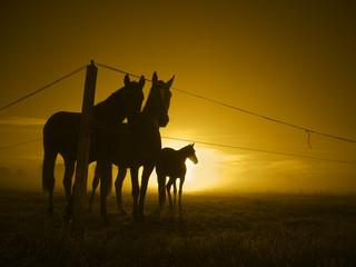 three horses at fence_toned