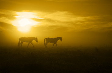 two horses in the Sunrise_toned