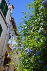 plante grimpante dans les rues de Cassis, France