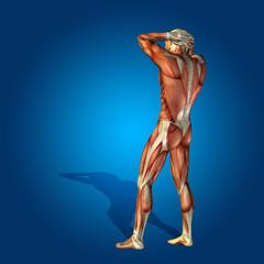 Conceptual 3D human man health anatomy