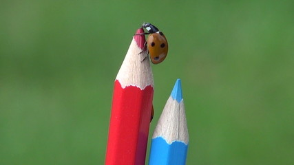 luck symbol ladybird ladybug on artist colorful pencil