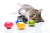 katze spielt mit ostereiern