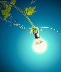 green ivy and light bulb