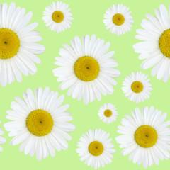 Daisy flowers pattern