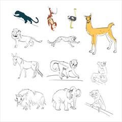 panther, monkey, ostrich, llama, lion, cheetah, mule, donkey, ho