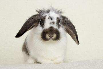 rabbit looking