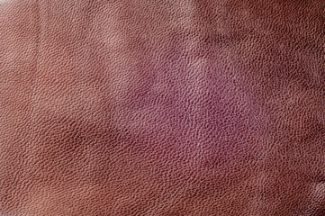 texture of the skin