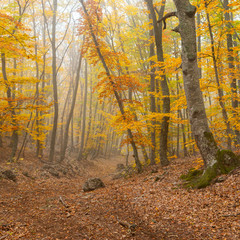 Landscape with fog in wild autumnal forest