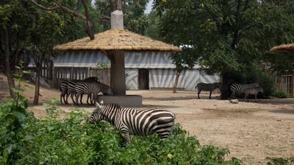 Beijing, China - Jul 20, 2014 - Beijing Zoo