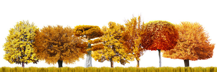 Many autumnal trees isolated on white, Autumn forest