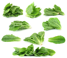 resh green lettuce leaves