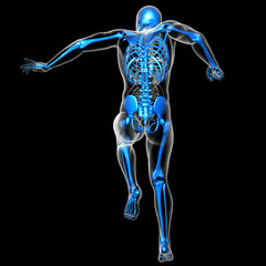 3d render medical illustration of the skeleton
