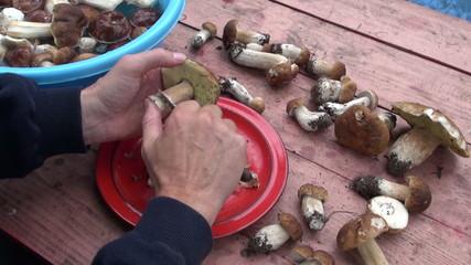 cutting preparing edible mushroom fungi boletus