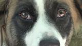 close up of cute mutt dog pet poster