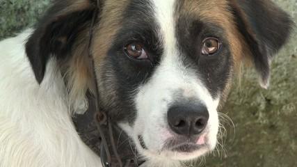 close up of cute mutt dog pet
