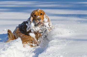 Puppy Dog while playing on the snow