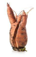 Carrot mutant