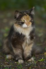 Squinting Cat