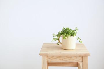 イスと観葉植物