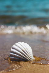 white marine shell on the sand