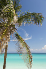 Bright Caribbean Beach with Palm Trees