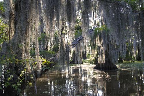 Bayou Swamp Scene with Spanish Moss - 75208040
