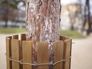 Schutzmantel für jungen Stadtbaum