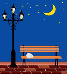 Cat and night