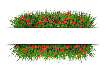 Banner with green grass and red poppy, isolated