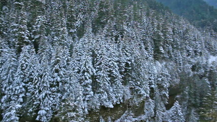 Panning Movie of Snow Covered Trees along Hiking Trails