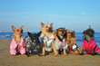 canvas print picture - Dogs sitting on beach