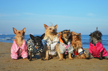 Dogs sitting on beach