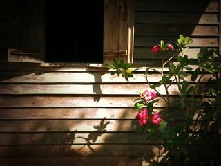 Pink Bignonia